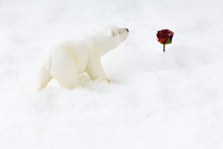 Polar bear toy approaching rose in snow