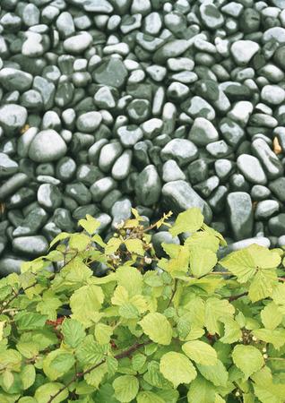 Rocks and brambles