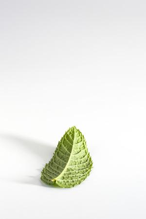 Mint leaf LANG_EVOIMAGES
