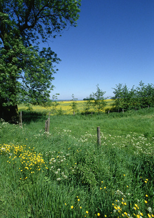 France, Picardy, field with wildflowers growing near fence