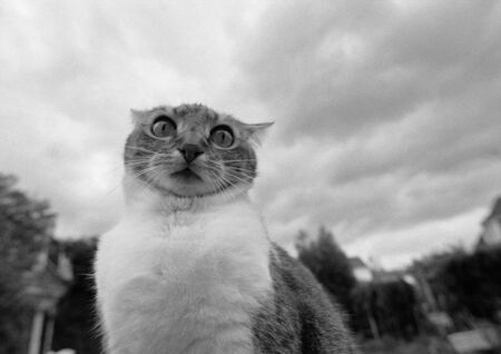 Cats face, black and white, low angle view LANG_EVOIMAGES