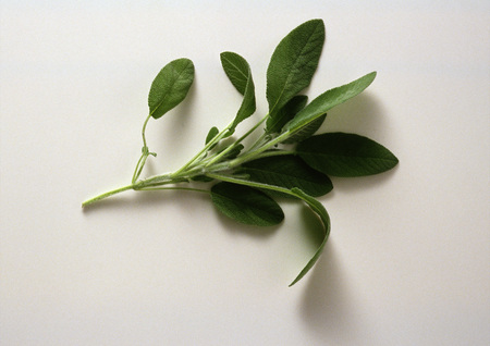holistic view: Fresh sage, white background LANG_EVOIMAGES