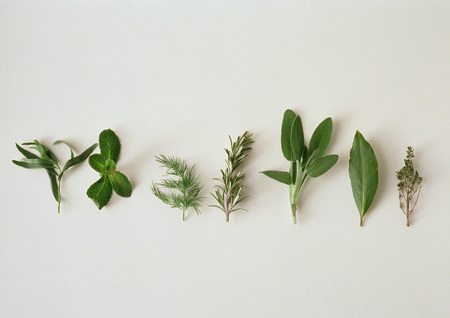 Various herbs, lined up horizontally, white background LANG_EVOIMAGES