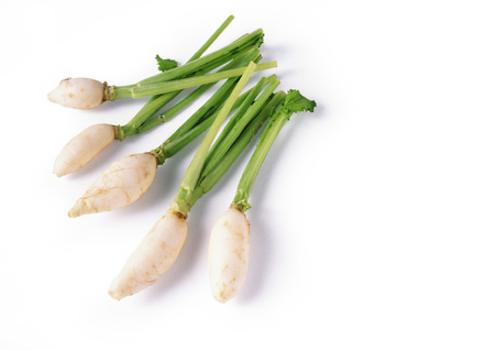 dikon: Dikon radishes, full length LANG_EVOIMAGES