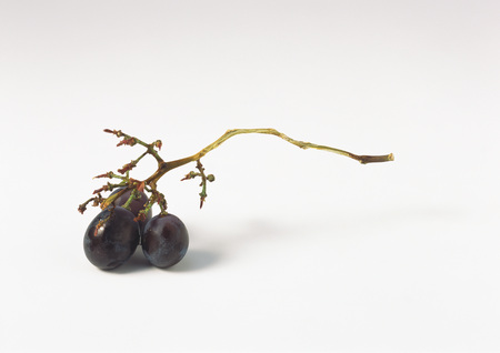 Grape bunch stem with three grapes