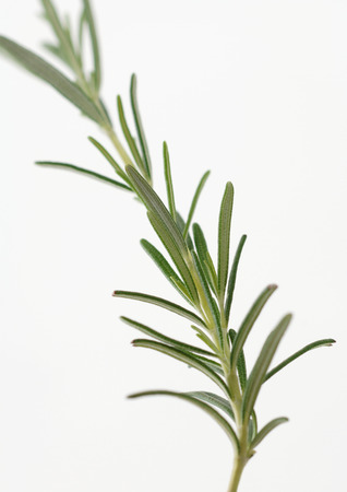 holistic view: Sprig of rosemary LANG_EVOIMAGES