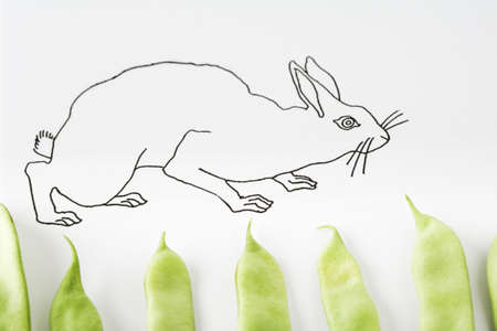Drawing of rabbit walking on fresh pea pods LANG_EVOIMAGES