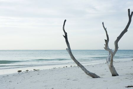 Driftwood sticking up out of the sand at the beach LANG_EVOIMAGES