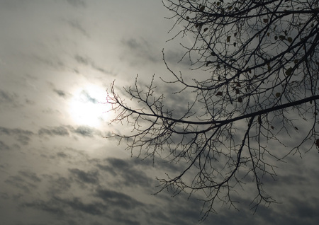 Cloudy sky and bare branches LANG_EVOIMAGES