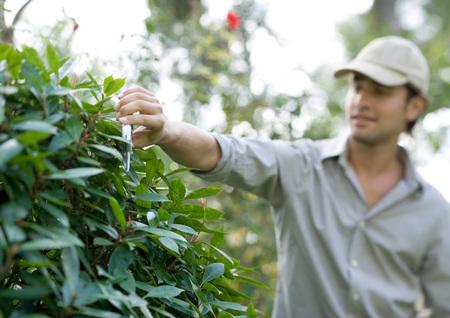 Man pruning bush