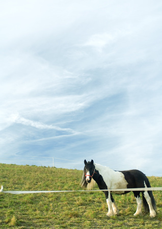 Horse in green pasture LANG_EVOIMAGES