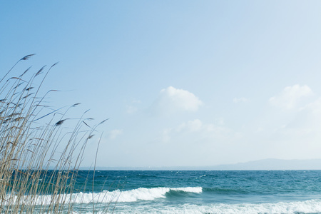 over the edge: Beach with grasses growing in foreground LANG_EVOIMAGES