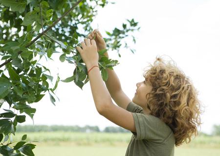 Boy picking leaf from bush