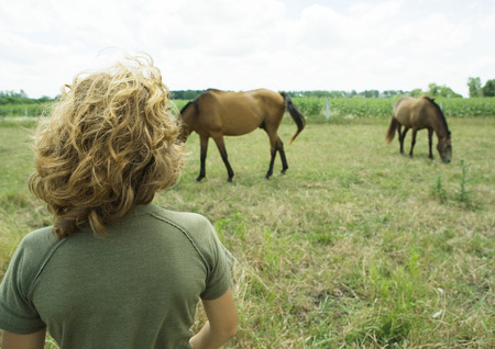 Boy looking at horses in field LANG_EVOIMAGES