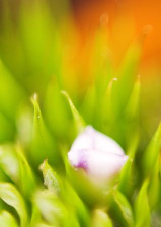 Bromeliad bud, extreme close-up