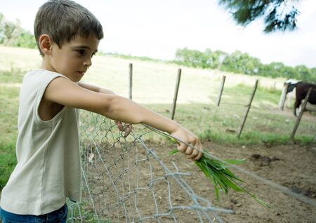 Boy standing next to fence, holding out handful of grass LANG_EVOIMAGES