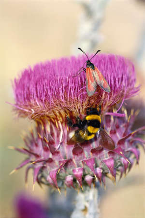 Insects on thistle flower LANG_EVOIMAGES