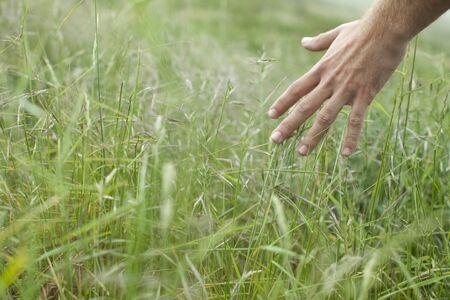 Mans hand touching wild grasses