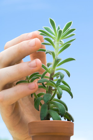Hand touching succulent plant, close-up