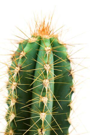 Cactus, close-up LANG_EVOIMAGES