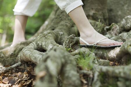 Woman wearing sandals walking on roots of tree, low section LANG_EVOIMAGES