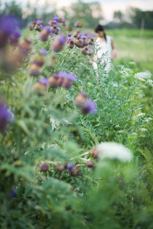 purples: Young woman in garden in blurred mid distance, focus on thistle flowers