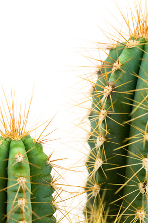 Cacti, close-up