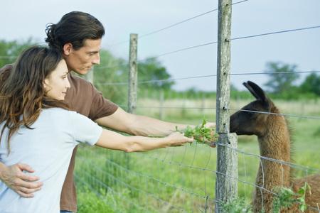 Couple feeding llama through fence