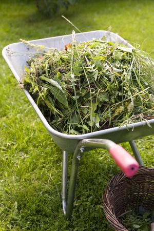 Yard clippings heaped in wheelbarrow