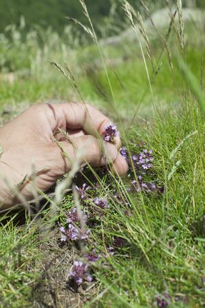 Hand picking wildflower