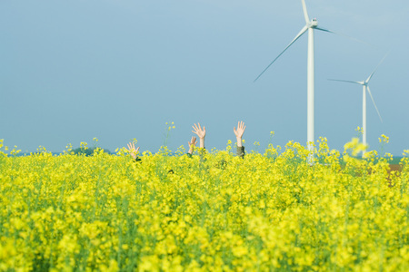Two sets of hands rising out of field of colza, wind turbines in background
