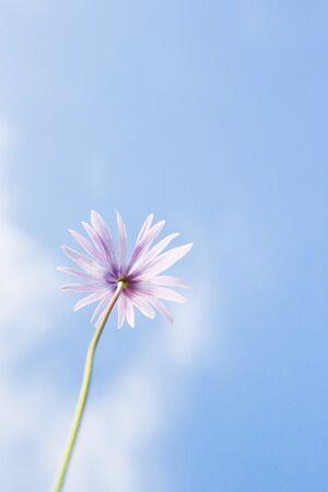 purples: Flower, sky in background LANG_EVOIMAGES