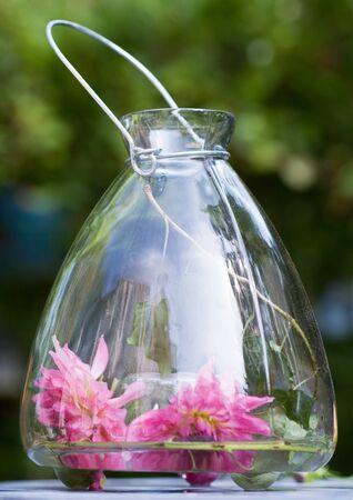Flowers in lantern LANG_EVOIMAGES