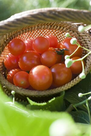 Ripe cherry tomatoes in wooden basket