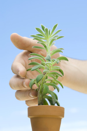 Hand touching succulent plant