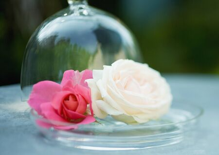 Rose blossoms on glass tray