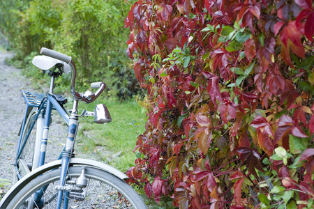 Bicycle parked next to hedge LANG_EVOIMAGES
