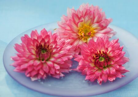 whimsy: Dahlias in vase LANG_EVOIMAGES