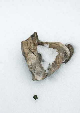 Chunk of wood on snowy background LANG_EVOIMAGES