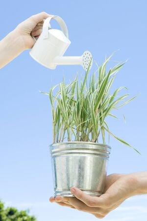 Potted plant being watered LANG_EVOIMAGES