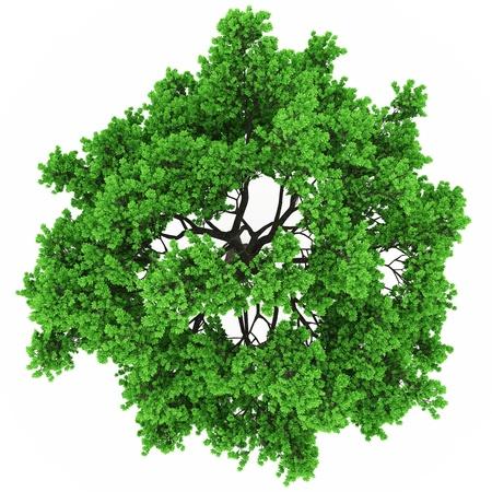 arbre vue dessus: vue la cime des arbres