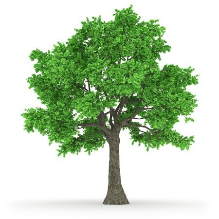 tree Stock Photo - 17947514