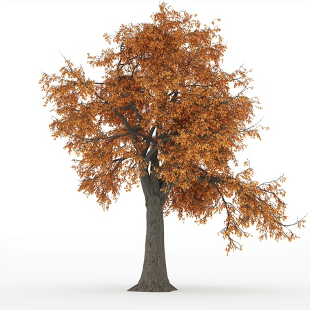 ash tree autumn Stock Photo - 18004395