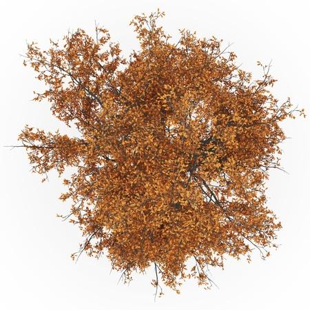 arbre vue dessus: automne fr�ne haut