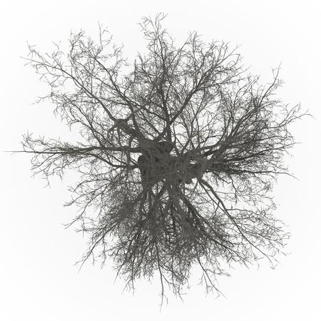 물푸레 나무 위쪽 잎이 스톡 콘텐츠