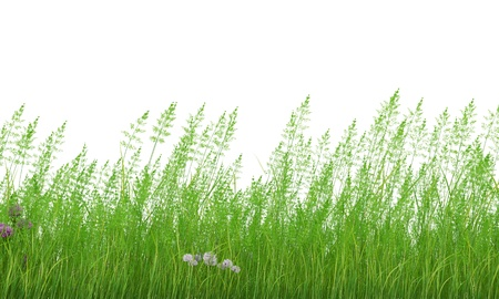 grass Stock Photo - 18004388
