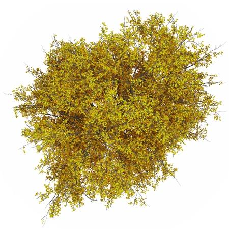 arbre vue dessus: haut fr�ne