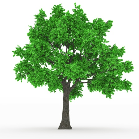 tree Stock Photo - 18093526