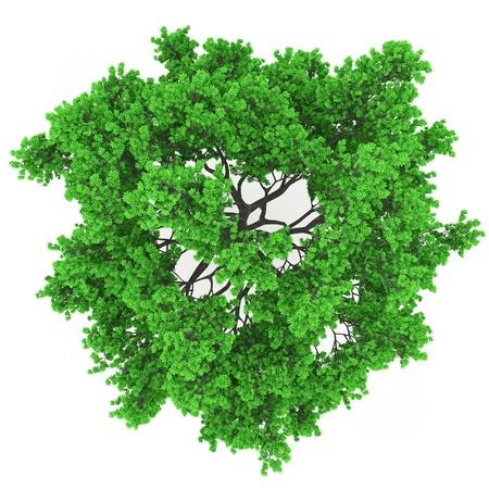 buisson: vue la cime des arbres