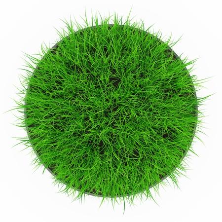 野草: 草のポットのトップ ビュー